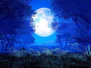 image d'une lune derrière des branches d'arbres bleus